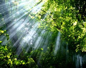 Sun rays through the woods 23597   Wallpapers landscape scenery