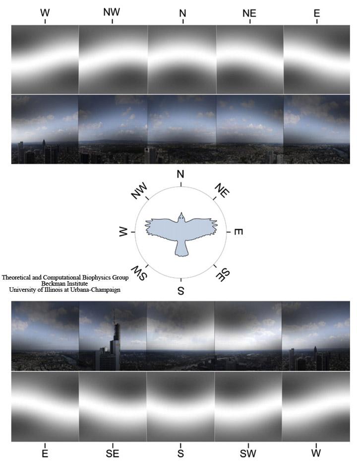 Deze afbeelding heeft een leeg alt-atribuut; de bestandsnaam is magnetic_vision1.jpg